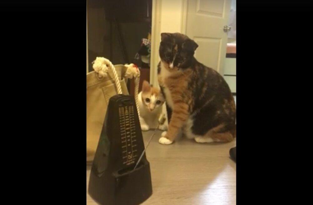 Pisarateni naerutav VIDEO: Vaata kasside hindamatut reaktsiooni metronoomi tiksumisele!