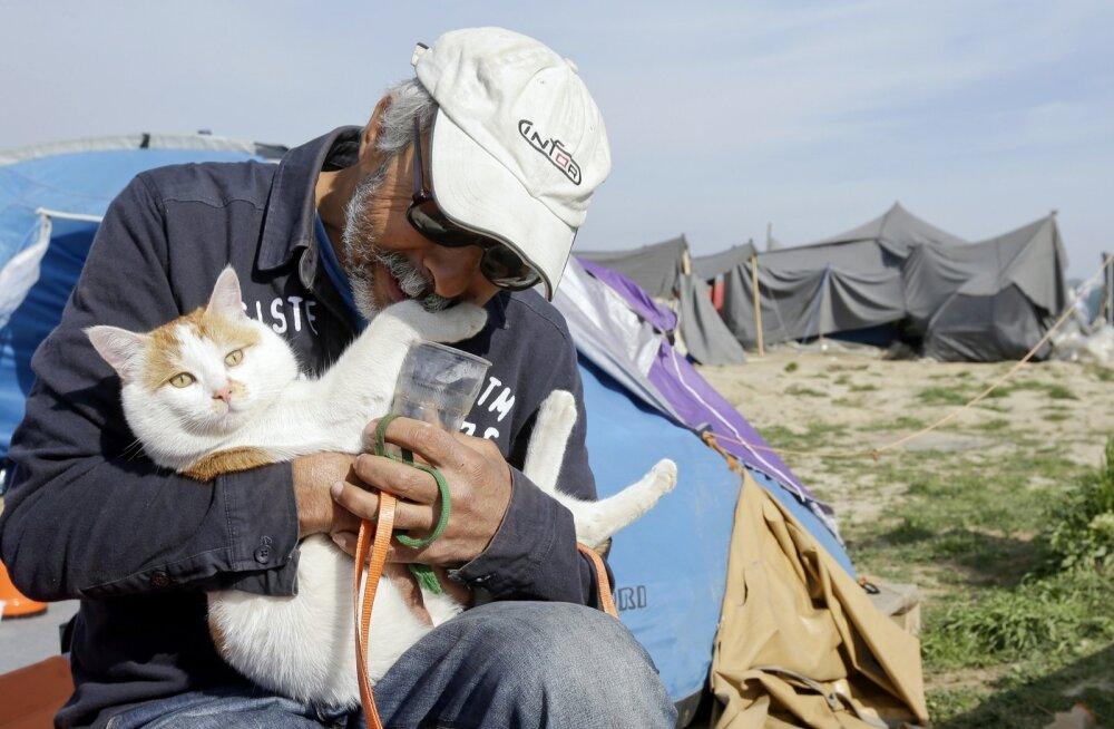 Damaskusest pärit Ali Abdud pages Süüria sõja eest Kreekasse koos kassi Taboushiga. Nüüd ootavad nad edasipääsu Makedoonia piiri äärses põgenikelaagris.