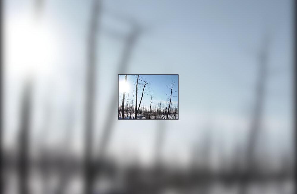 Siberi linna Norilskit ümbritsevad surnud tsoon ja happevihmad