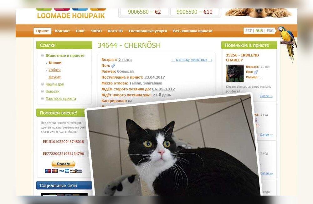 Читатель взял в приюте кота за 30 евро. А за его возврат попросили 300