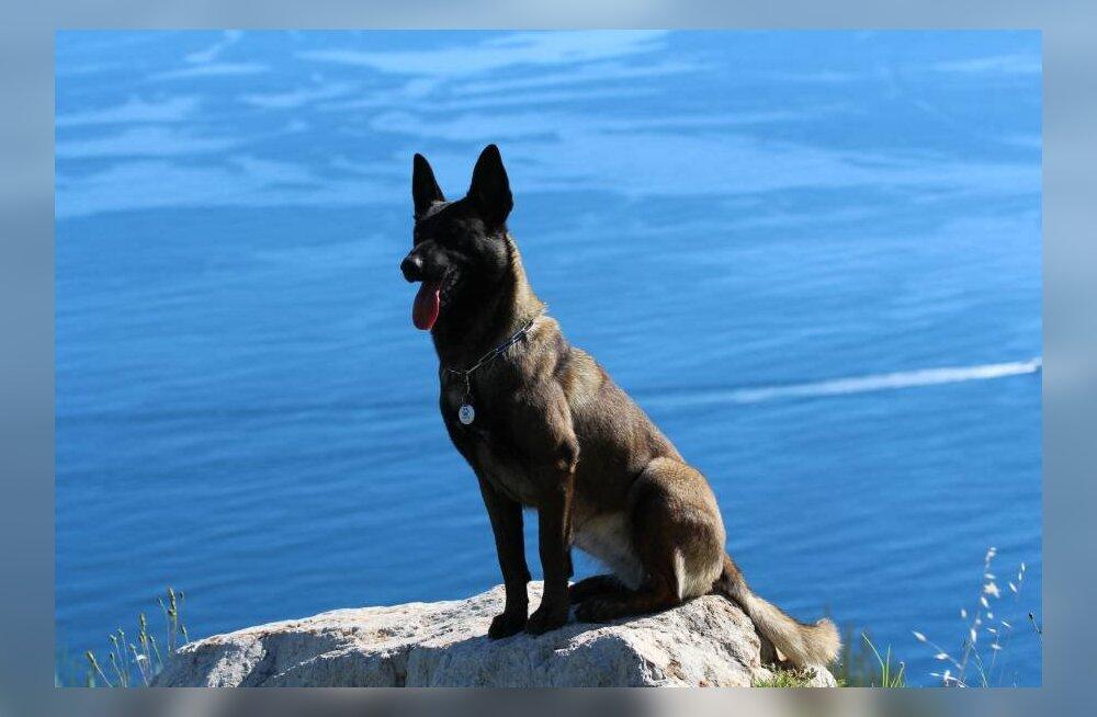 Eestlased käivitasid Monacos unikaalse lemmiklooma tuvastamise äpi