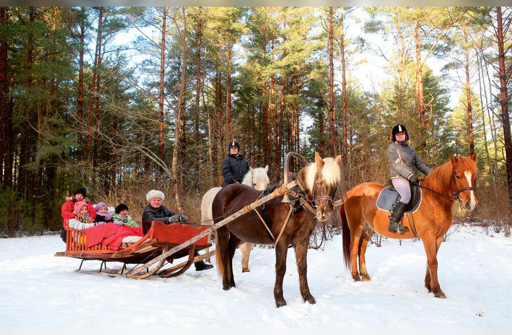 Tihuse turismitalu – eesti hobuse kaitsevaim