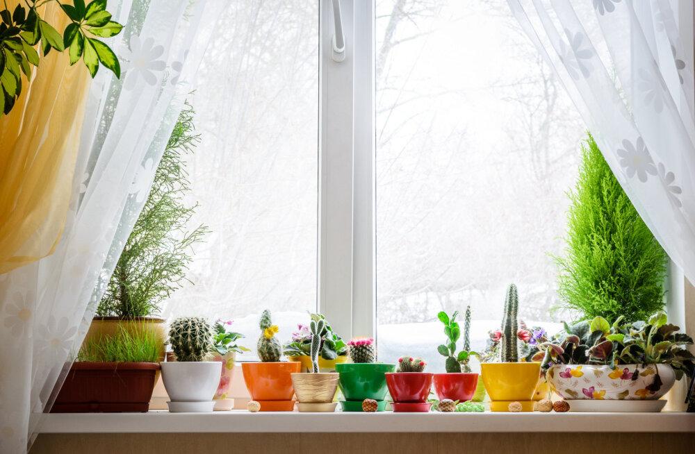 Mida soojem tuba, seda suurem taimede valgusvajadus