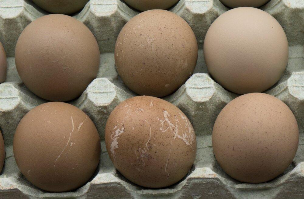 Salmonelloosioht liikvel: Eesti kauplustest korjati viie tuntud kaubamärgi munad