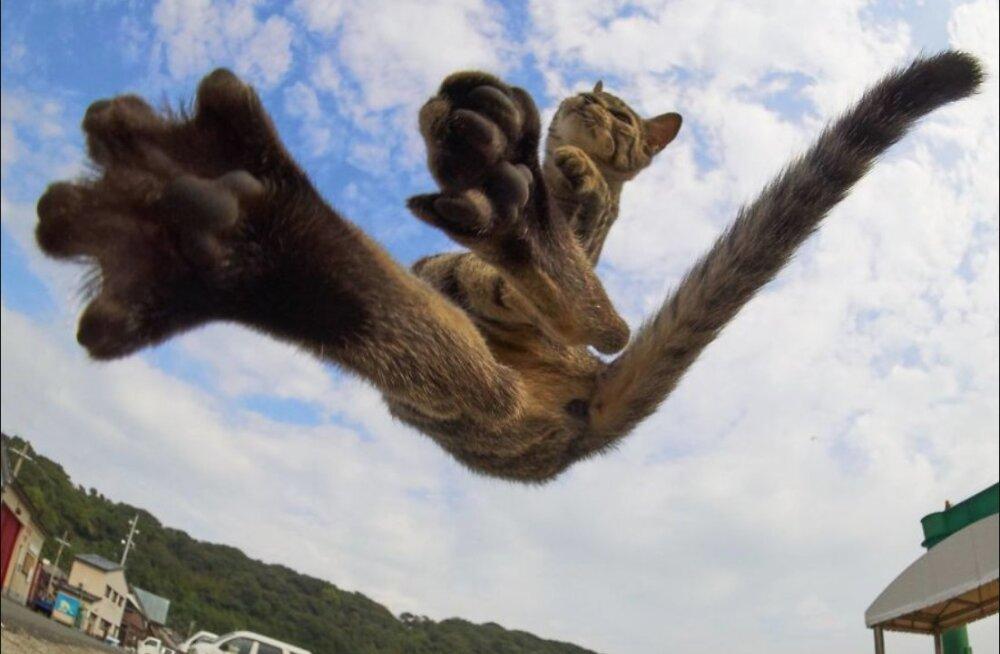 15 vahvat FOTOT | Kas tegemist on kodukassi või hoopis oskusliku <em>ninja'</em>ga?