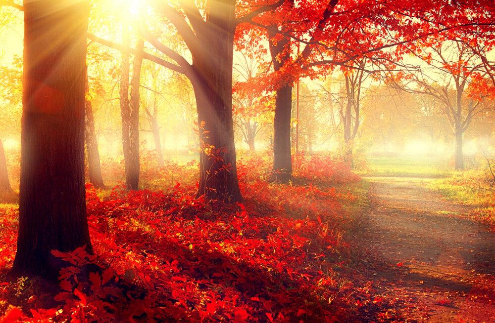 Täna on mihklipäev: ennustatakse inimsaatust ja eeloleva talve ilmasid
