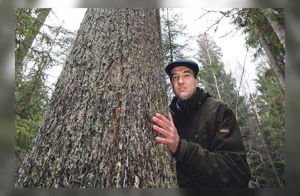 Järvseljal leiti Eesti kõrgeimad puud