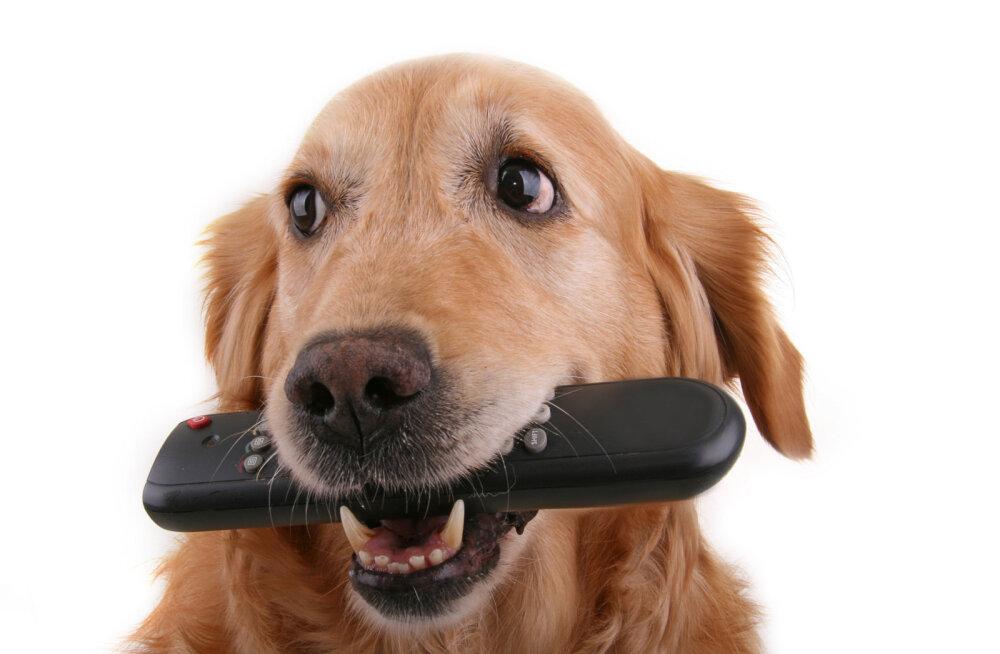 Lihtsaid nippe, kuidas tagada oma lemmikloomale hea elu ka korteris elades