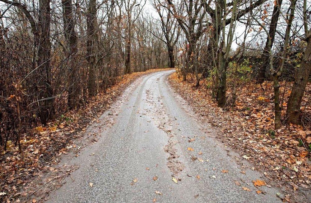 Juhtidele: jäite- ja libeduseoht teedel on suur, nähtavust segab udu