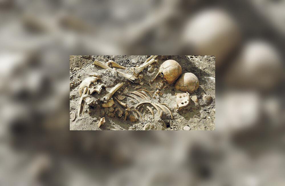 Arheoloogid leidsid kesklinnast vana võllaroogade matmispaiga