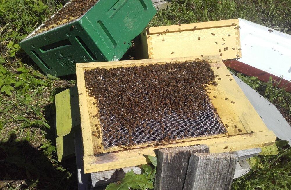 Surnud mesilased Lääne- Virumaal