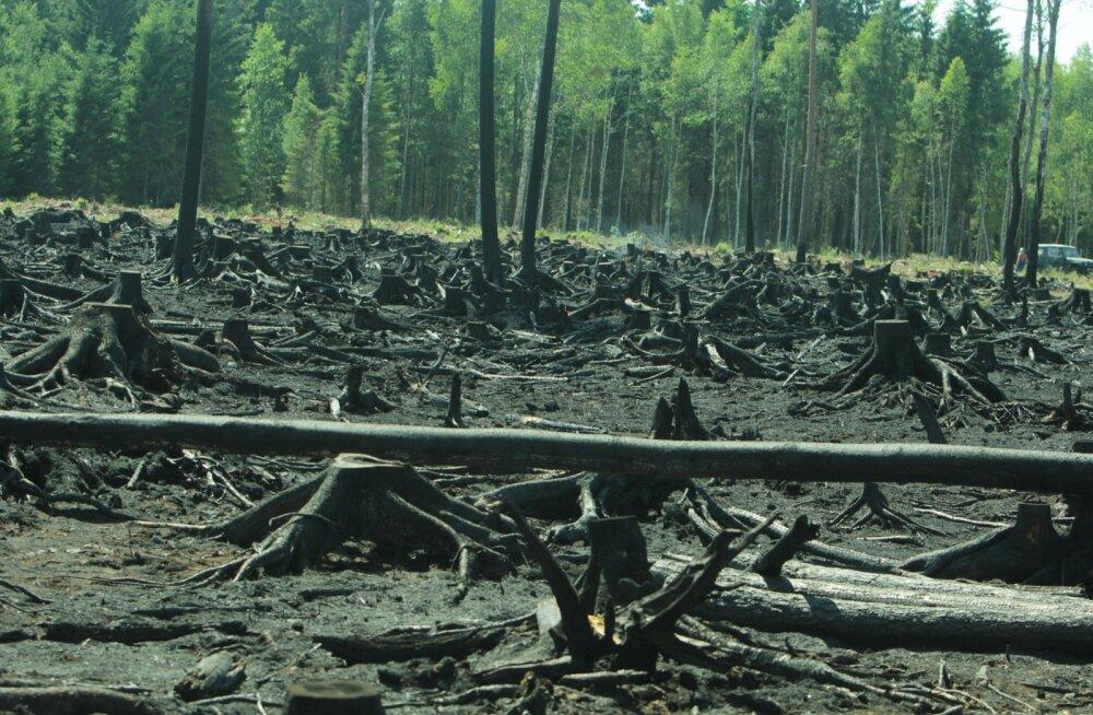 Vikipalu seekordne metsapõleng.