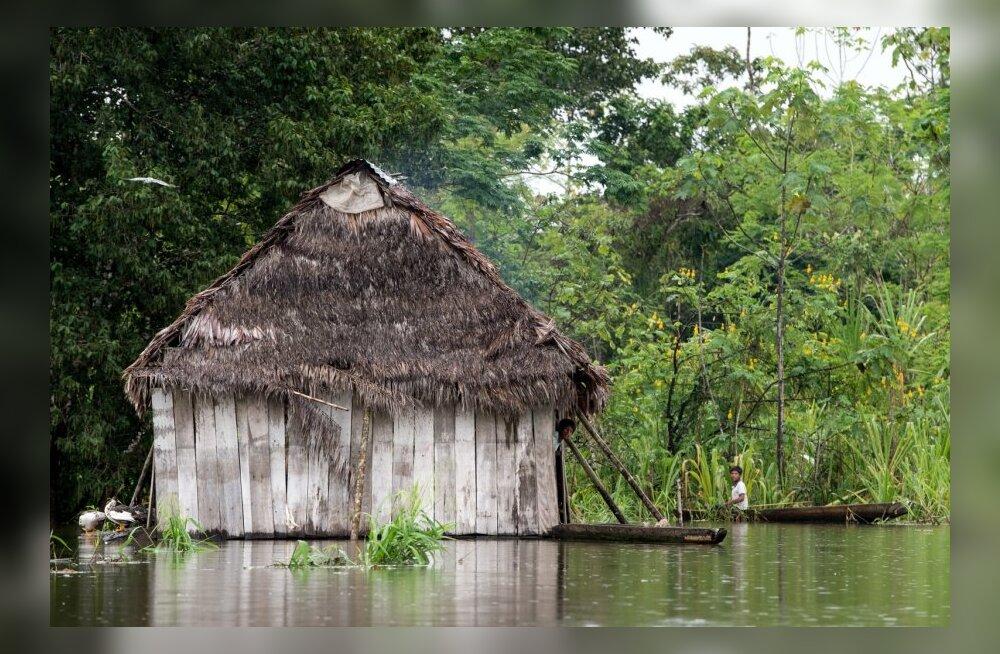 Maksuparadiisid laastavad keskkonda