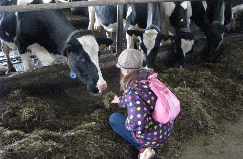 lehmad ja lapsed