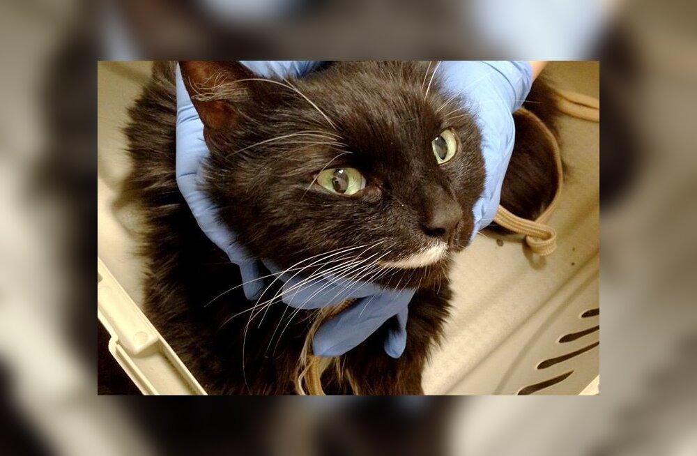 Raudteejaama hüljatud kass vajab ravikuludeks abi