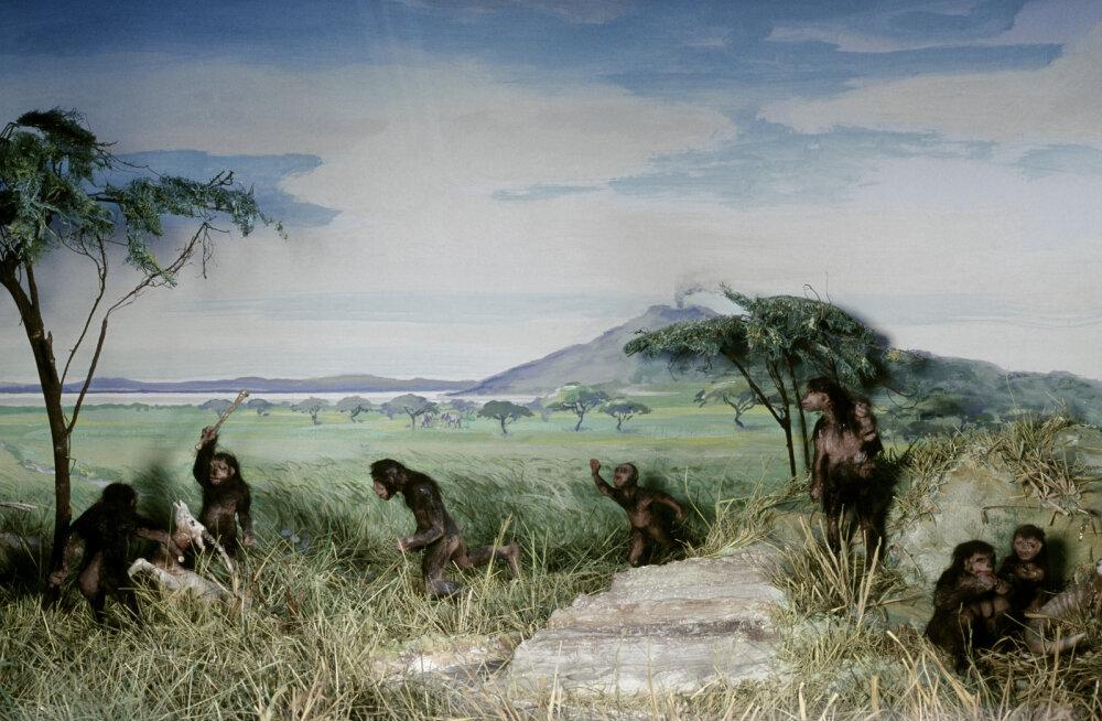 Meie esivanemad kõndisid kahel jalal ja sirge seljaga palju varem seniarvatust