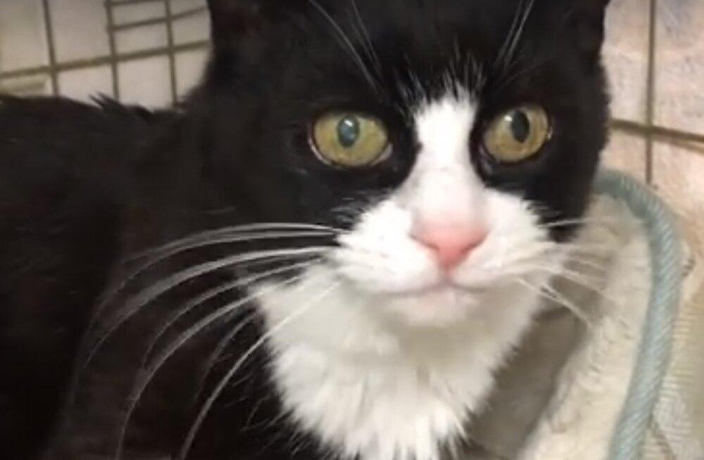 Tähekese lugu: hüljatud kass, kelle maailmas valitseb vaid pilkane pimedus