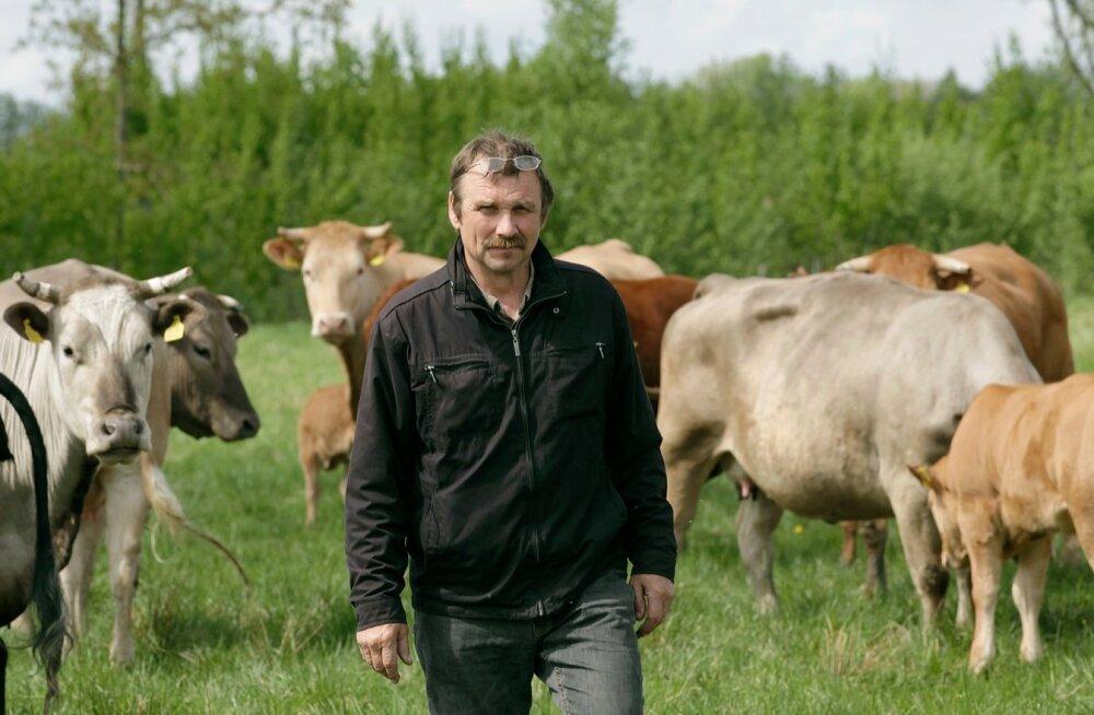Aasta Põllumees 2013 kandidaat Aldo Vaan ja tema lihaveised