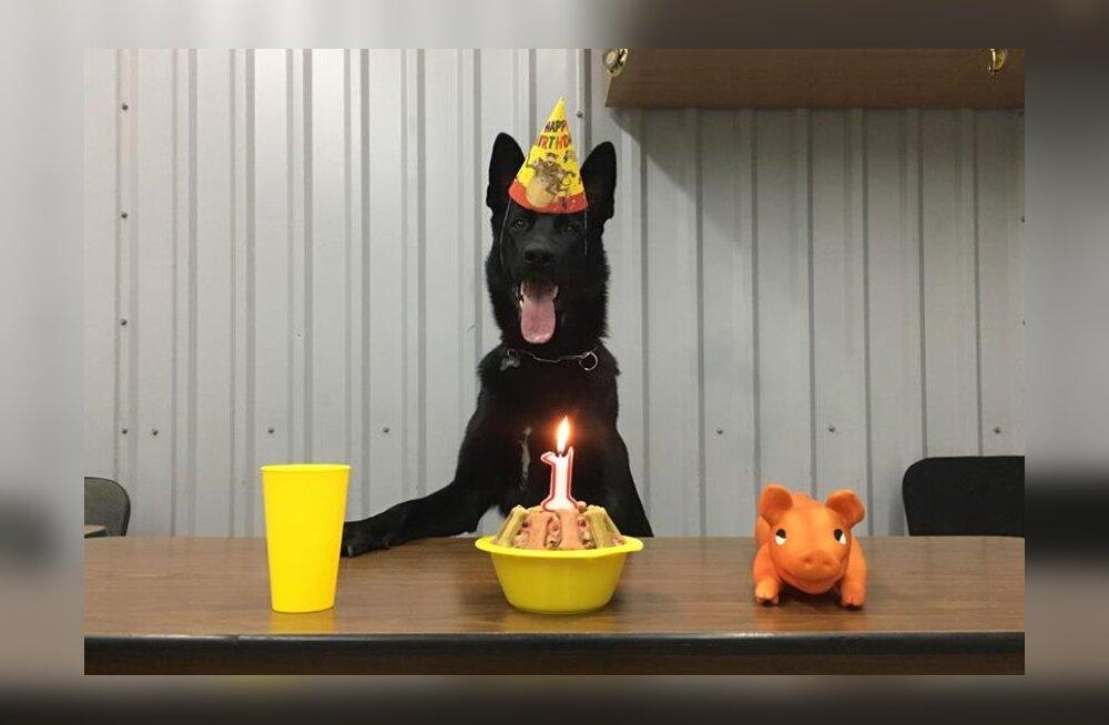 FOTO   Tallinna Vangla neljakäpaline korravalvur tähistas elu esimest sünnipäeva