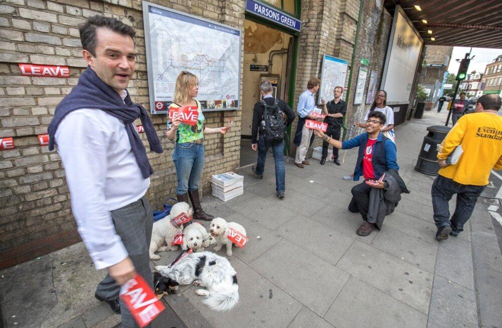 Seltskond euroskeptikuid Parsons Greeni metroojaama sissepääsu juures. Üks naine on kaasa võtnud neli imearmast koera, kes kannavad euroskeptikute plagusid.