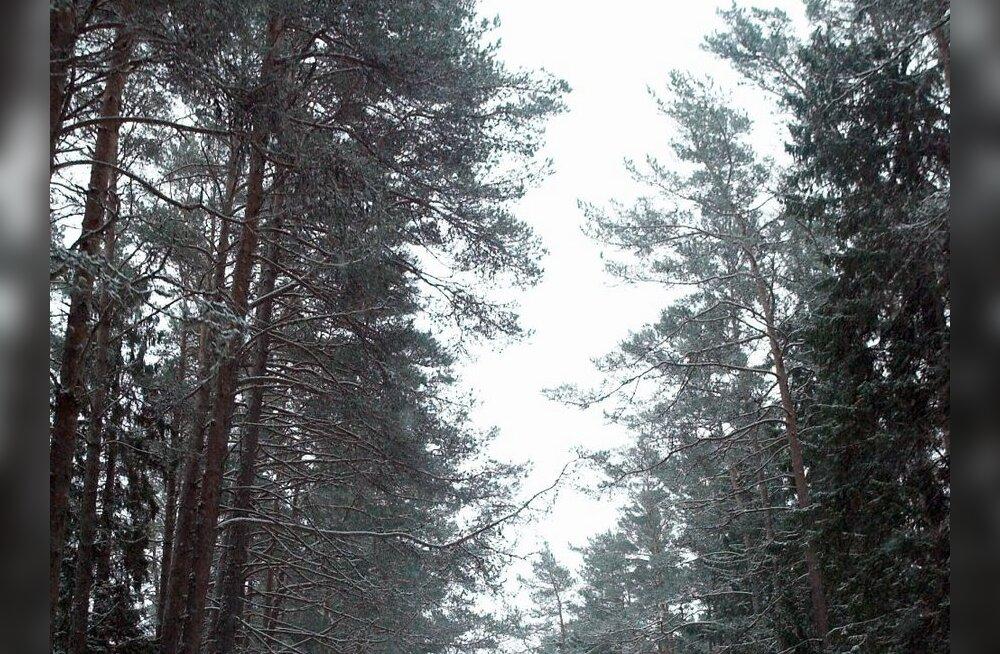 Rae valla elanikud võitlevad metsa pärast