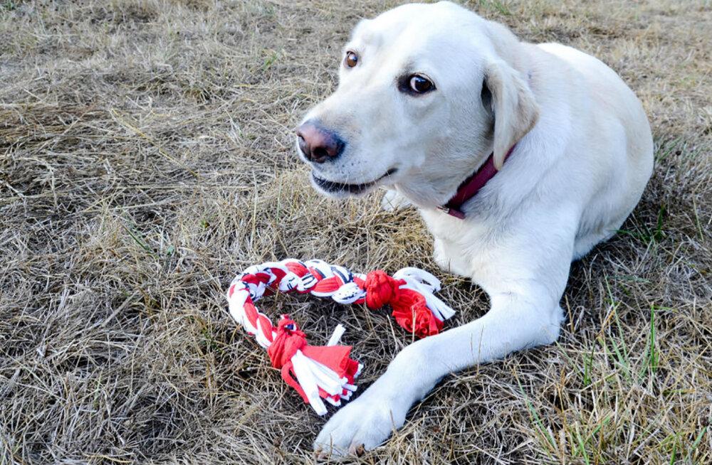 Miks premeerida oma koera mänguasjaga ja kuidas lelude eluiga pikendada?