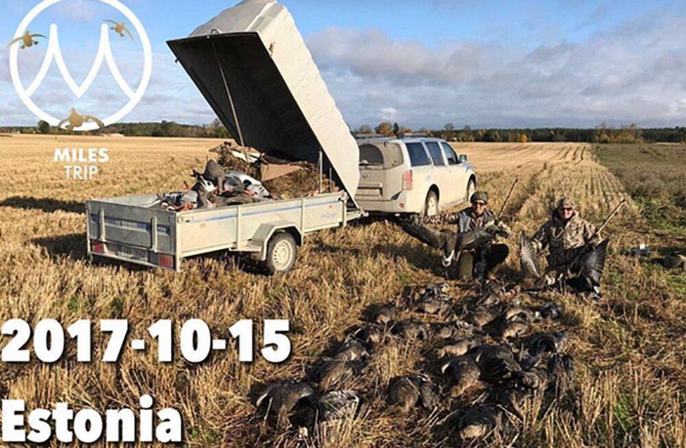 FOTOD | Välismaised jahituristid uhkeldavad internetis Eestis tapetud lindudega