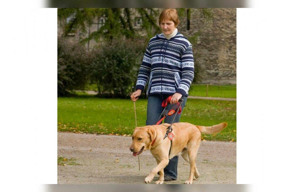 Sotsiaaltööd tegevad koerad – inimeste igapäevased abilised