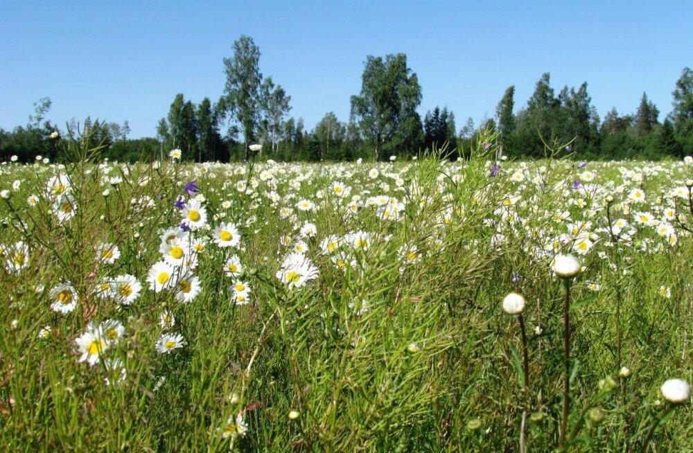 Leili metsalood | Looduse lilleaed on suveõide puhkenud