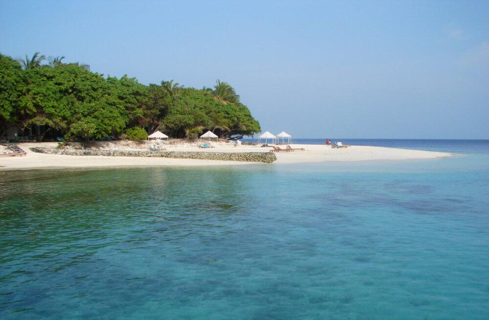 Veel üks põhjus mitte liiva süüa: Maldiivide maalilised rannad pärinevad papagoikala taguotsast