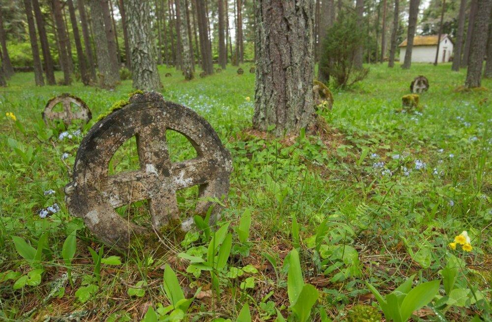 Rõngasristid Vormsi kirikuaias – kunagi võis Eesti aladel elada üle 10 000 rootslase.