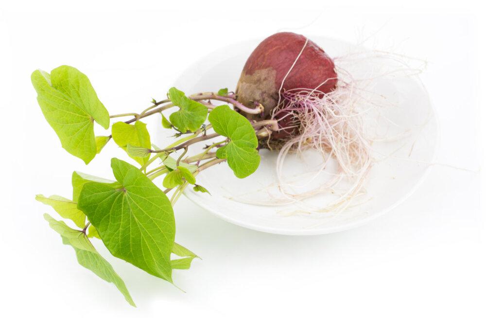 Vaata, kuidas toidujääkidest silmailu kasvatada