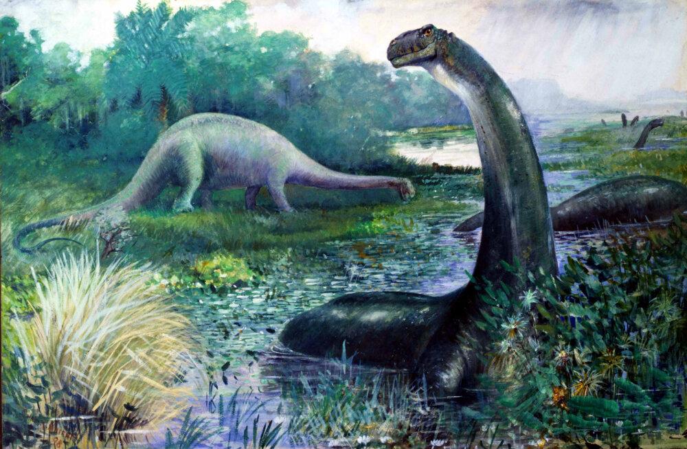 Kes siin kõndis? Lääne-Austraalias paiknevad kinnitatud suurimad dinosauruse jalajäljed