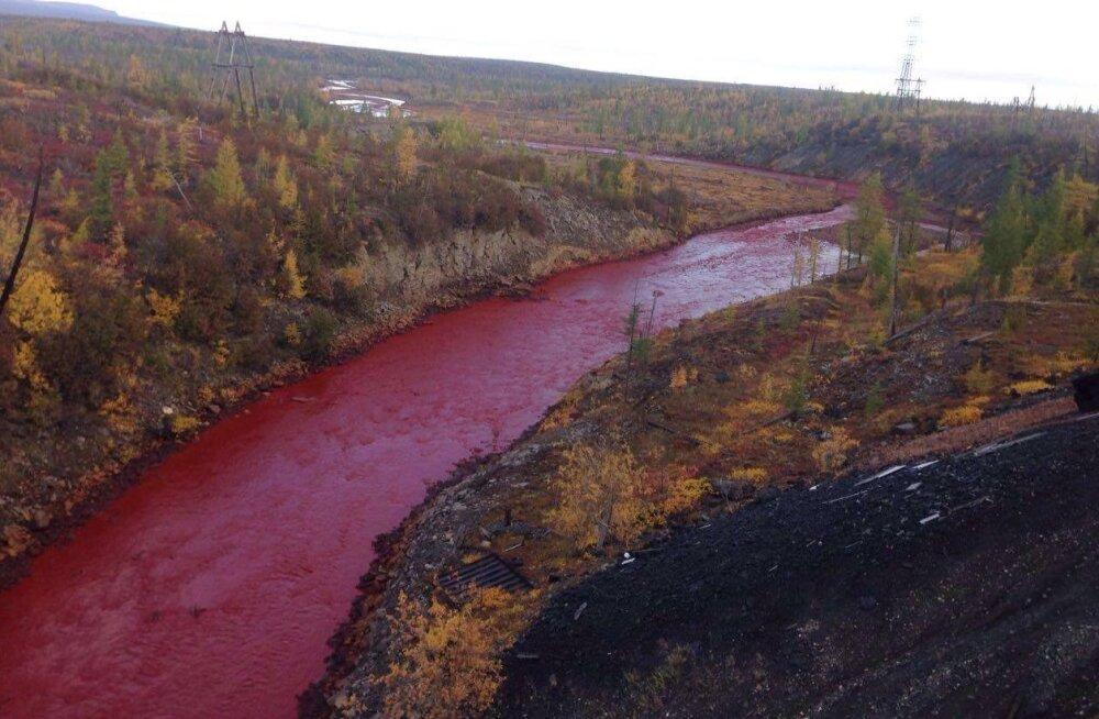 NÄDALA LOETUIMAD LOOD: Veripunane jõgi, armastav koer ja Kuuse-taadi ilmaennustus