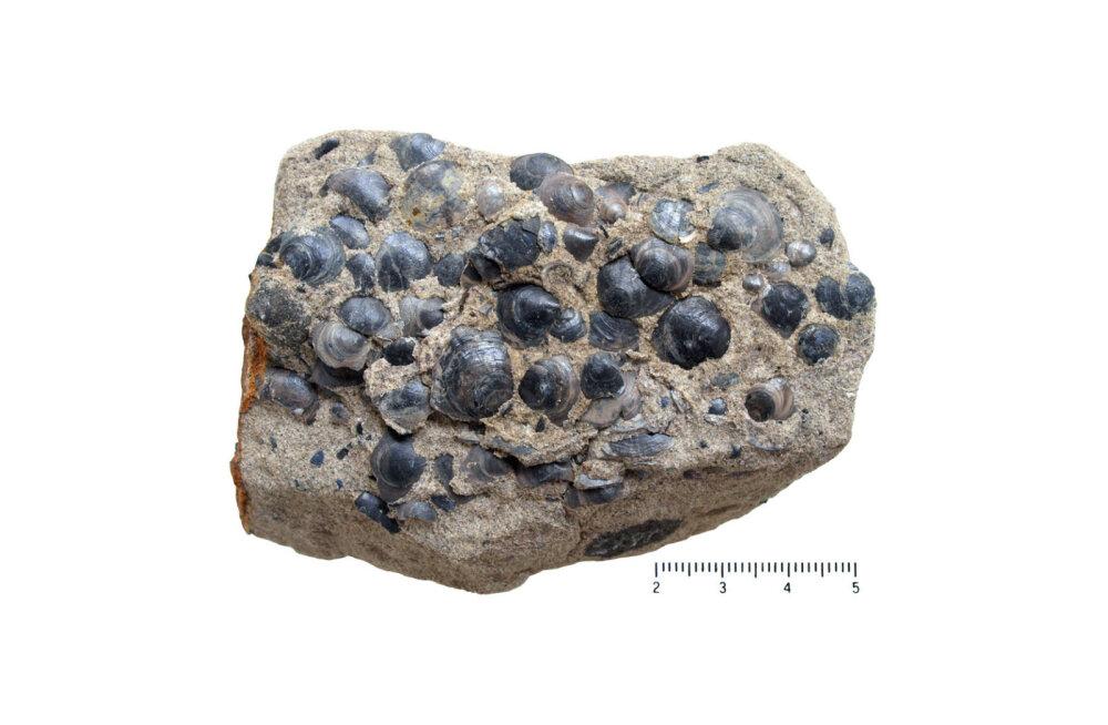 Kas peaksime fosforiiti kaevandama?