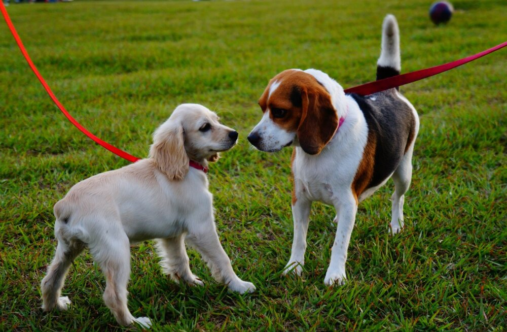 5 kohta, mis koera sotsialiseerimiseks ei sobi ja mida lemmikuga vältida tasub