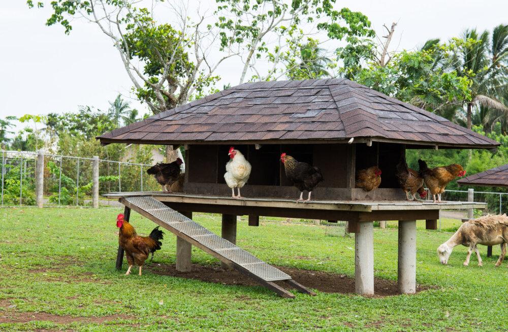 FOTOD | Kaheksa kaunist maja, mida kanad kindlasti armastavad