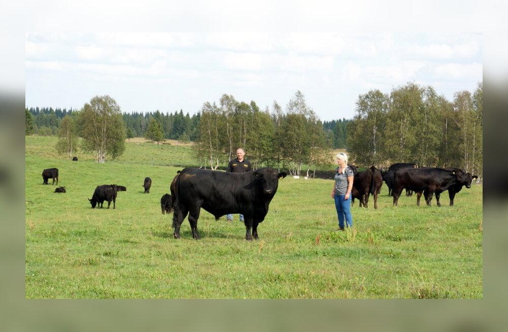 Aberdiin-anguse klubi käis Rootsis talunike juhitud tapamaja kaemas