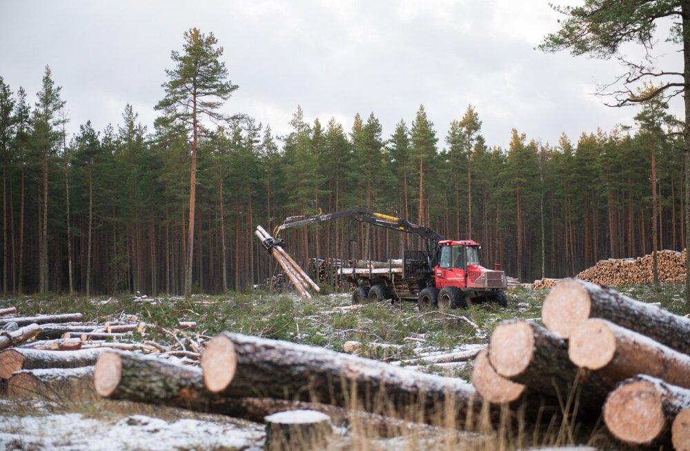 RMK metsadest on küpsed 28%, erametsadest 26%.