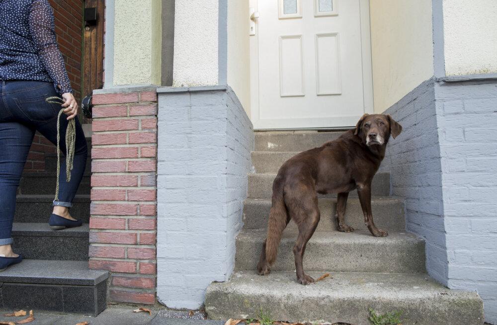 KUI LEMMIKLOOM RAUGASTUB   21. sajandi dementsed koerad ei leia küla pealt koduustki üles