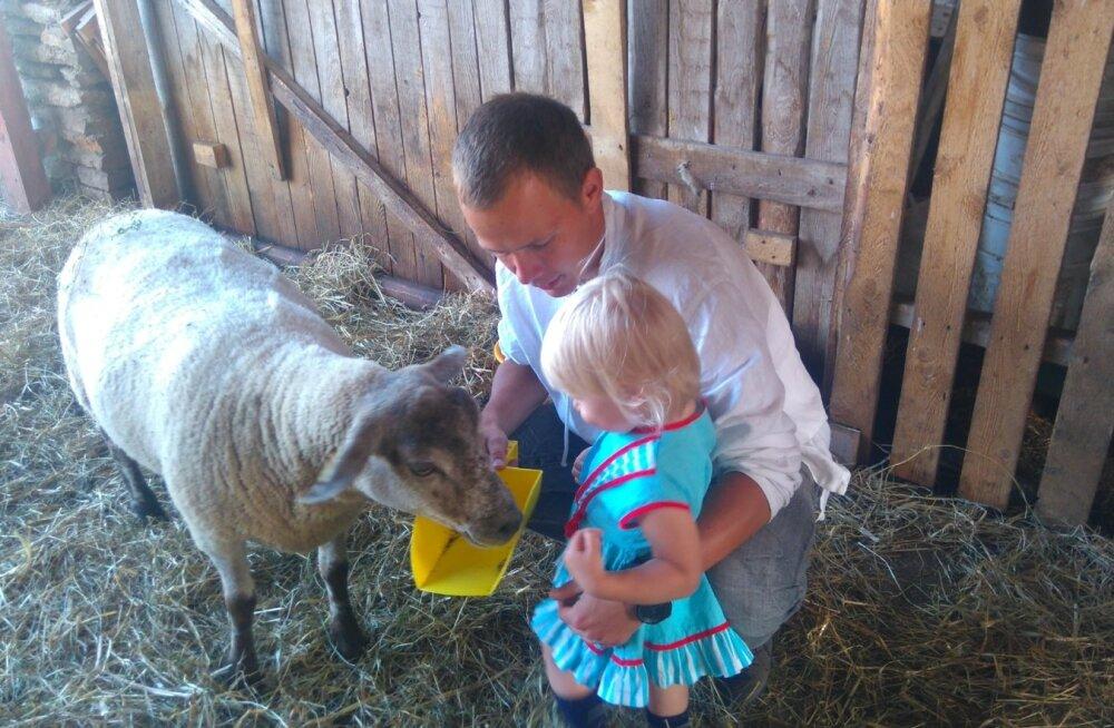 Iisaka lambakasvatus ja käsitöötalu