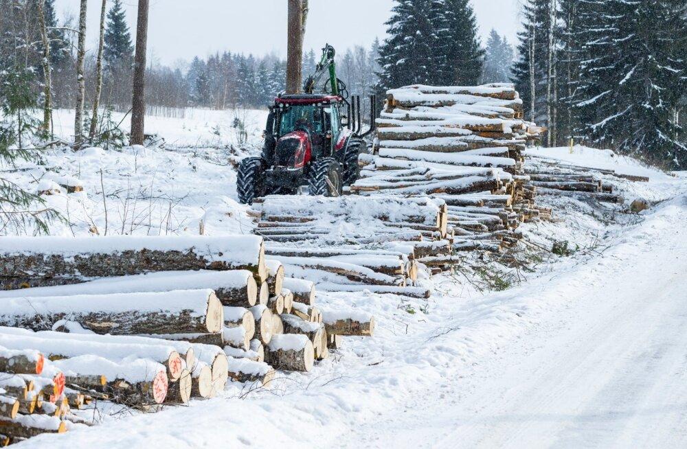 Metsamüügil lasuvad maksud soosivad maa maha müümist, mitte metsa majandamist