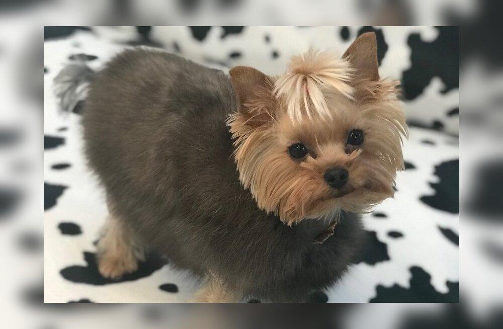 ФОТО: Собаке Лены Лениной подарили шубку из соболя