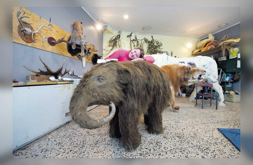 Linnas tammub ringi mammut