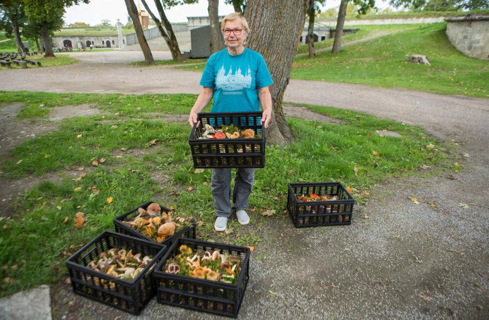MEIE MAA | Põuasest suvest hoolimata õnnestub seenenäitus kokku saada