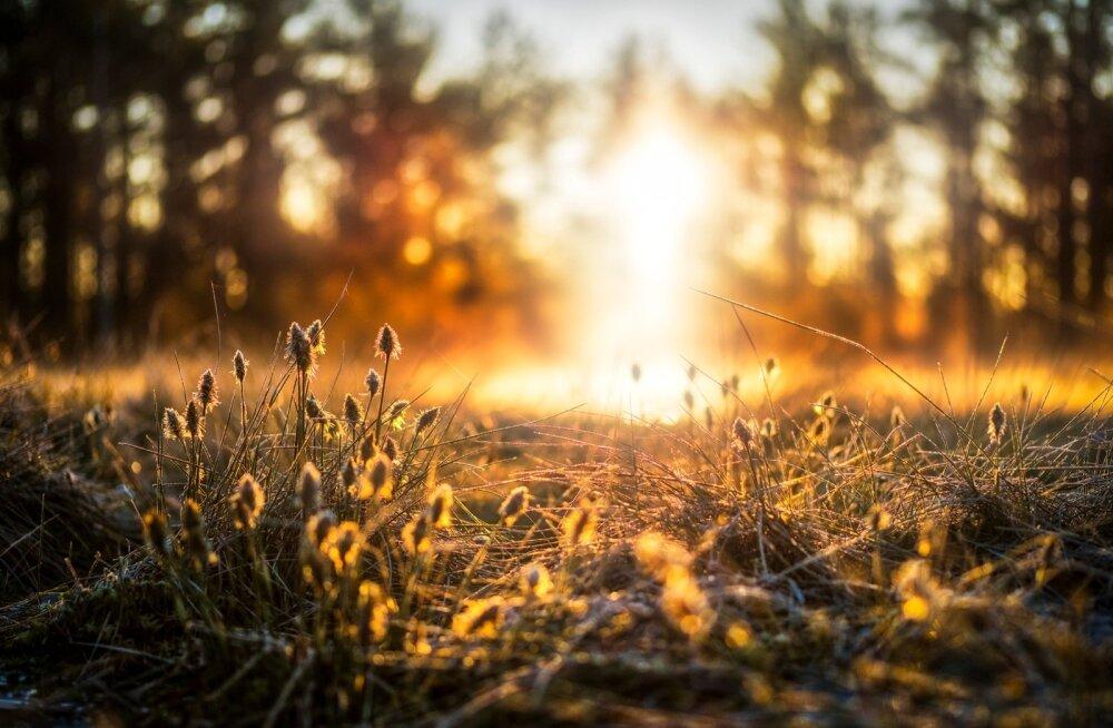 Nädalavahetus tuleb olulise sajuta, esmaspäevast niiskemaks ja soojemaks