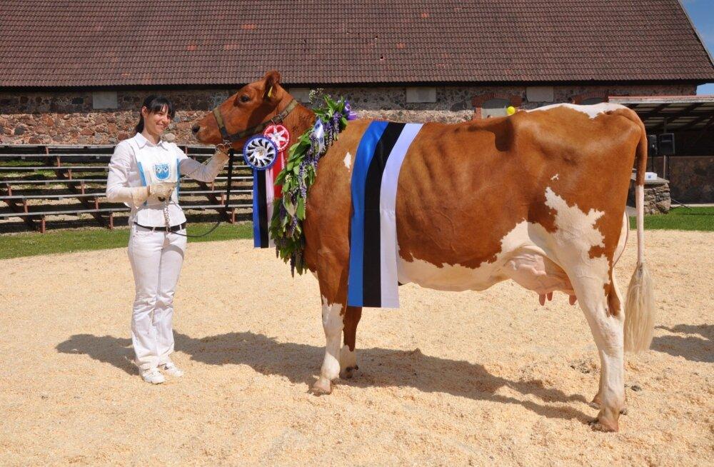 Eesti punases tõus on palju piimakaid ja kauneid lehmi. Pildil EPK Viss 2017 Marga Tartu Agro Rahinge farmist ja Tiina Rodim.