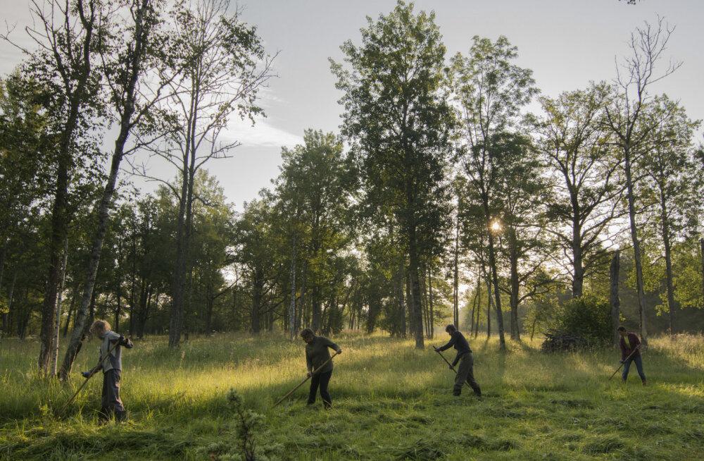 Eestimaa Looduse Fond kutsub ühisele heinateole