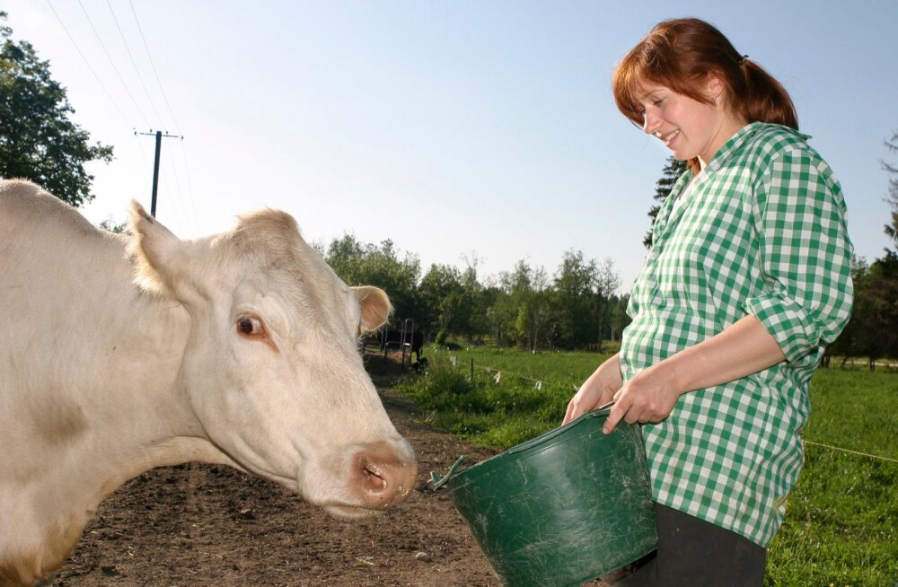 Airi Külvet töötab selle nimel, et lihaveisekasvatajaid ei sunnitaks iga päev seadust rikkuma.