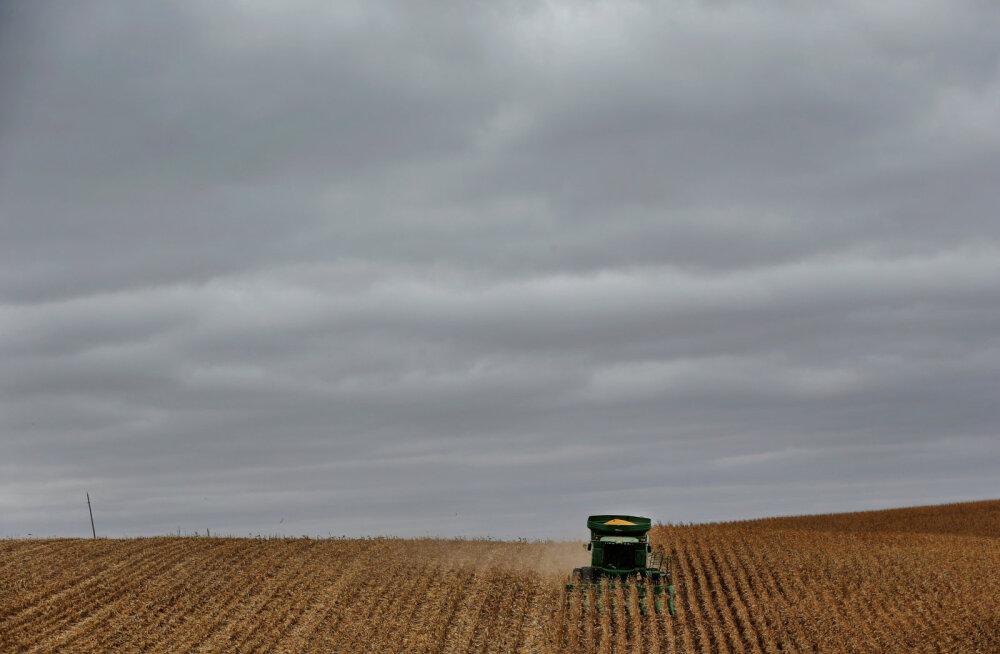 Teadlased analüüsisid 6000 uuringut ja leidsid, et GMO-mais on tervisele tavalisest kasulikum